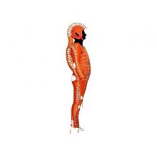 Реабилитационный костюм Атлант